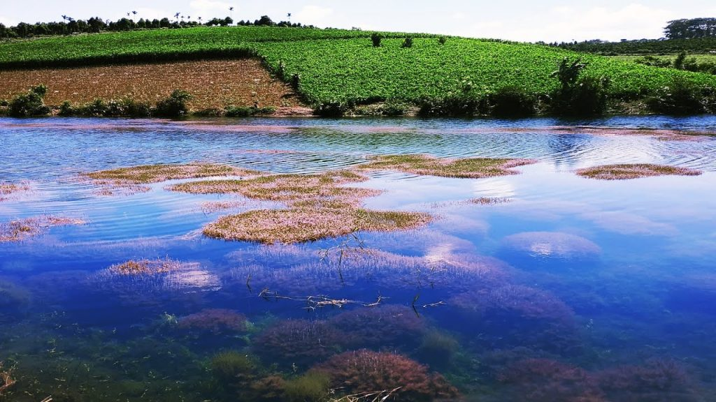 Hồ tảo hồng ở B'lao